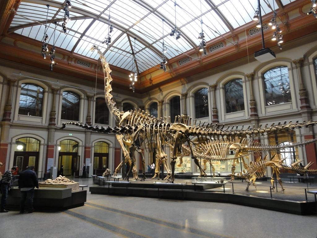Naturhistorisk Museum – Museum für Naturkunde